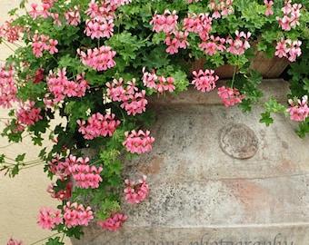 Pink Geraniums Art, Italy Wall Art Print, Pink Flower Photography,Italian Villa Pink Flower Print,Italy Photography,Tuscany Print,Flower Art