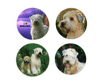 Soft-Coated Wheaten Terrier  Magnets:  4 Cool Wheaties for your home, your collection,  or to give as a unique gift