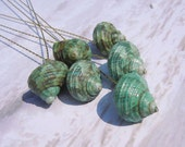 Seashell Stems - 6 Naturally Colorful Petite Jade Turbo Seashells for Bouquet Bridal Bouquet or Centerpieces
