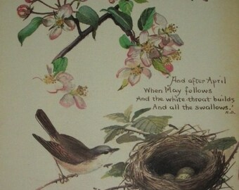 1970s Botanical Print of 1906 Edith Holden Water Color, Crab-apple, White Throats and Nest