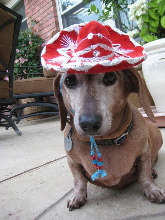 Sombrero for cat or dog - Customizeable Rumba Red