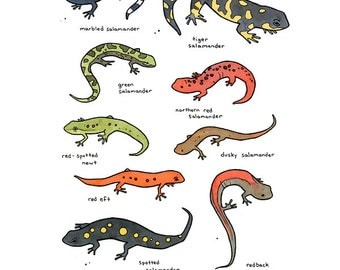 Salamanders Illustrated Chart 8x10 Whimsical Print