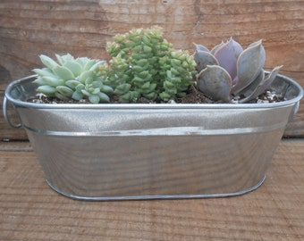 "Succulent Centerpiece, Rustic Oval Galvanized Tubs, Buckets, 8"" x 4"" x 3"",  Includes 3 Succulents For Planting, Barn Weddings"