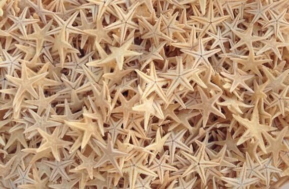 "50 Tiny Starfish for Crafting or Decorating - 1/4"" - 7/8"" Beach Decor star fish"