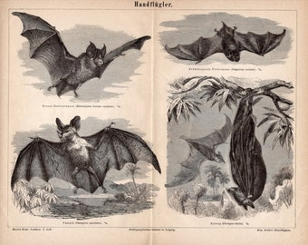 1889 ANTIQUE BAT LITHOGRAPH flying bats scene original antique print for halloween fabulous scary bats - handflugler