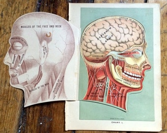 1903 HUMAN ANTIQUE ANATOMY interactive medical lithograph - layers of the head - original antique print - skull scalp brain