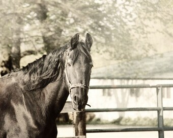 Horse Photography black and white horse stallion farm barn country western rustic 8x10 animal photograph equine