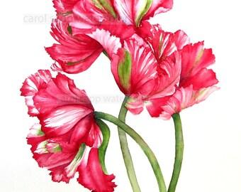 red parrot tulips print of original watercolor