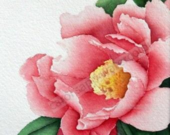"rose peony watercolor flower painting 12"" x 12"" archival print by Carol Sapp"