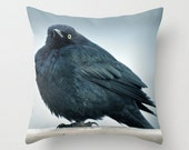 Are You Looking At Me - Fine Art Photography, Throw Pillow Cover, Bird Home Decor, Little Bird, Fluffy Feathers, Black, Blue iridescence