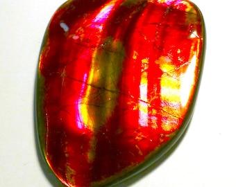 Ammolite Cabochon Stabilized Large Vibrant Red Designer Freeform Korite Ammonite Alberta Canadian Precious Gemstone Pendant Rare Opalized