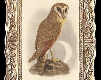 Owl Miniature Dollhouse Art Picture 6276