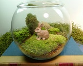 Small Covered Vase TERRARIUM with Bunny, Moss.,Great Gift!. Terrariums by mossterrariums on Etsy.