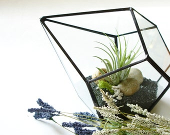 Terrarium with Air Plant, Geometric Terrarium Planter