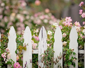 """Floral Fence Photography - Shabby Chic Cottage Decor - Monterey California - Floral Home Decor -Fine Art Photograph - """"Picket Fence II"""""""
