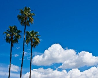 Palm Trees and Clouds in San Diego No. 654 a Landscape Photograph