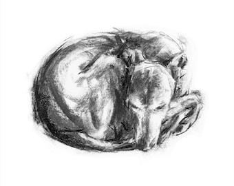 Whippet Curled up - fine art dog print - whippet gift