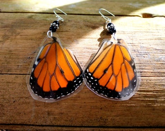 Real Butterfly Earrings, Monarch Butterfly