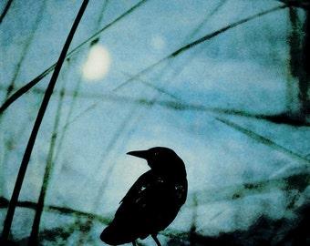 Raven Photograph Crow and Light Orb, Black Blue Photograph, Surreal Crow Wall Art 8x8