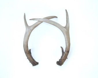 Pair of Antlers - Faux Taxidermy Antler Decor - Resin Realistic Unique Antlers - Table Top Fake Antler Shed DA00