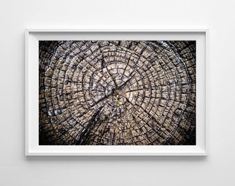 Nature Photography Tree Rings Forest Decor - Nature Art, Tree Art, Nature Print - Small and Oversized Art Prints Available