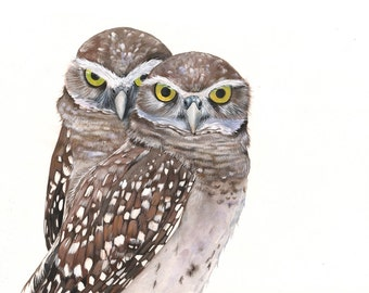 Burrowing Owl Watercolor and Gouache Painting print of watercolor painting 5 by 7 size wall art print - bird art print