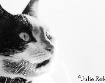 Cat Photo Black and White Cat Photograph, Kitty Photo, Animal Photograph, Cat Lover