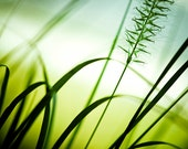 """Nature Photography - abstract wall art green grass white modern spring photo botanical print - 16x20, 11x14, 8x10 Photograph, """"Draw me In"""""""