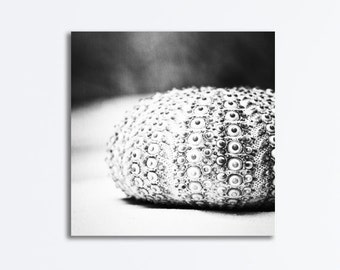 "Canvas Seashell Photography, black and white shell beach gallery wrap large grey wall art gray seashore picture coastal print, ""Sea Urchin"""