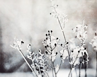 """Grey Nature Photography - light gray snow black and white branches neutral print large botanical photo branch wall art, """"Cold Winter Morn"""""""