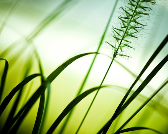 "Nature Photography - abstract wall art green grass white modern spring photo botanical print - 16x20, 11x14, 8x10 Photograph, ""Draw me In"""