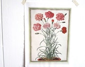 Carnations, watercolor of carnations, flower print vintage botanical pink and red bouquet frameable botanical art print vintage book