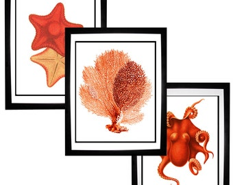 Red Orange Coral Sea Fan Octopus Starfish Vintage Style Nautical Art Print Set of 3 Natural History Beach House