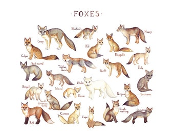 Foxes of the World Field Guide Style Watercolor Painting Fox Art Print