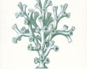 Coastal Decor Sea Coral Giclee Art Print E. Haeckel Natural History Fantasy Sea Coral No. 3 8x10 sea glass