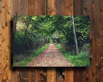 Woodland - Wooded Path photography - Woodland decor - Woodland canvas - Summer woods art - Woodland wall hanging