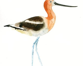 AVOCET 5x7 Print -Art Print-Bird Watercolor Print-Giclee Print-