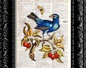Blue Jay Bird Illustration Print - Vintage Dictionary Print Vintage Book Print Page Art Upcycled Vintage Book Art