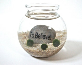 "Marimo Moss Ball Underwater Zen Terrarium with Wisdom Word Stone ""To Believe"", Wisdom Gift, Wisdom Decor, Wisdom Home Decor"