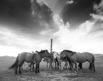 Horse photography black and white. Mongolian horses wall art home decor for horse lovers gift. Rustic country western living room decoration
