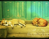 Dogs Photo Nepal - Fine Art Travel Print 8x12 TTV Sleeping Dogs Nepal - Tranquility