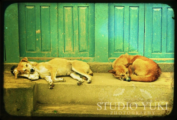 Sleeping Dogs, Photo, Travel Decor, Nepal, Napping, Turquoise, TTV, Vintage Look, Travel Photography, Funny Animals, Whimsical Home Decor