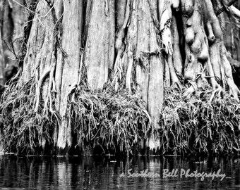 Black and White Bayou Print Water Photography STUMPS Moss 8x10 Trees Fall Trees Swamp Lake Photo Water Red Tree Louisiana Bayous 2