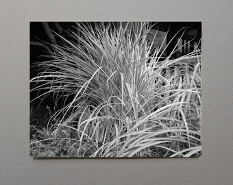 Spiky Plant Flash Photography Gift Dramatic Night Photography Garden Wall Art Illuminated Art Conversation Piece Living Room Decor Art Gift