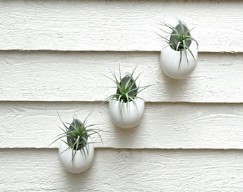 Set of 3 Hanging Matte White Ceramic Planters, Hanging Ceramic Planters, Egg Planters, Hanging Plant Holders, Hanging Air Plant Terrariums