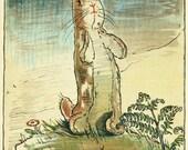 MEMBERSHIP! The Velveteen Rabbit Level