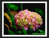 Summer Hydrangea--LOW COST-Downloadable Fine Art  Print-Will look Beautiful On Any Wall At Home Or Office