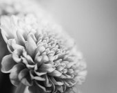 Chrysanthemum photo, Surreal, Dreamy, Nature Floral Images,  Flower photography, Ethereal, 12x12, botanical wall decor, gift, mother's day