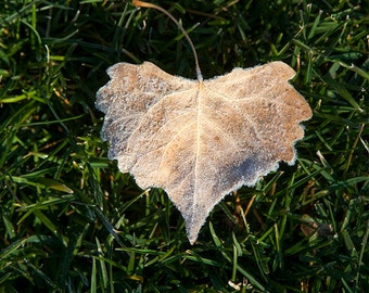 Love is Everywhere, Heart-Shaped Leaf in Grass, Fine Art Photography