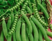Green Arrow Heirloom English Shelling Pea Seeds